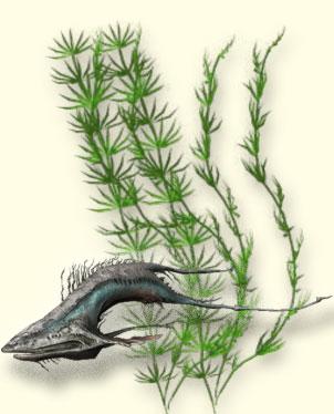 Рыба-пасть. Рыбалка Warframe